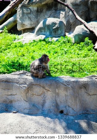 Detroit Zoo Animals #1339688837