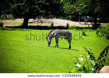 Detroit Zoo Animals #1339688846