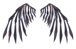 Devil wing plumage isolated on white background with clipping path