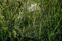 Dew covered spiderweb in meadow early summer morning.Dew drops and Cobweb in the grass in the early morning sunrise