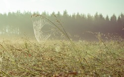 Dew covered spiderweb in meadow early summer morning with fog