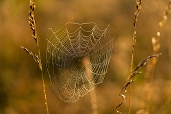 Dew covered spiderweb in morning glow.