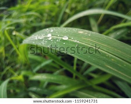 dew dew dew early Morning #1159241731