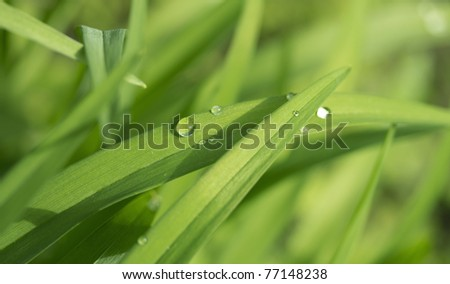 Dew drop on a blade of grass