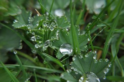 Dew drops at the morning grass