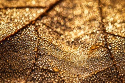 Dew drops on an autumn fallen leaf, shimmering in the sun, shot in close-up with bokeh. Abstract macro autumn background.