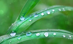 dew drops on green grass leaf close up. meadow grass in drops rain, nature scene. ecology, earth day, save pure water concept