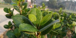 Dew drops-RajGhat-Morning phase