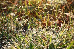 Dew on grass with morning light in winterseasons