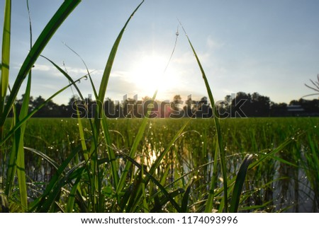 Dew on grass with morning sun, Abstract nature background #1174093996