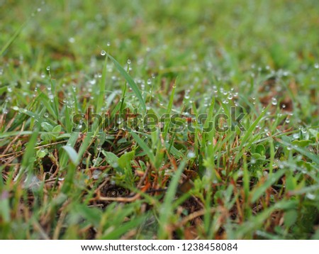 Dew on green grass #1238458084
