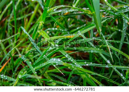Dew on green grass in the forest. #646272781