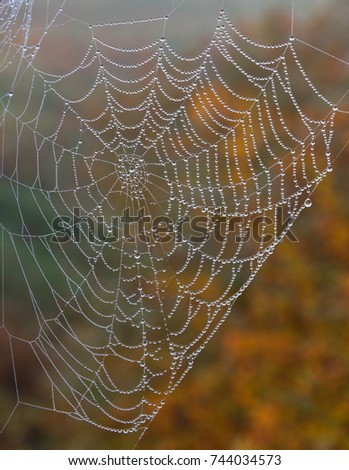 Dew on spider web (cobweb) at blurred colorful autumn background. #744034573