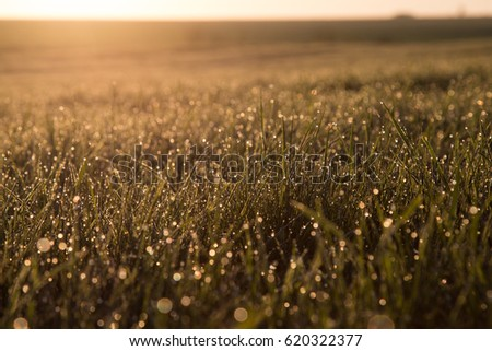 Dew on the grass against the background of the rising sun. #620322377