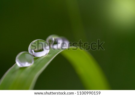 dewdrop on grass in nature.