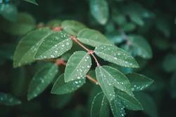 dewdrops, garden,spring,macro, laves, green, natural 3