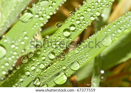 Dewdrops on the blades of grass.. Natural background. - stock photo