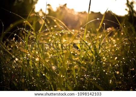 Dewy Grass Sunrise #1098142103