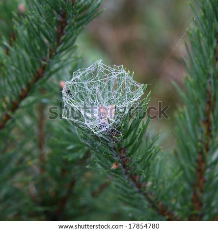 dewy spider's net - stock photo