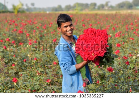 DHAKA, BANGLADESH - FEBRUARY 07, 2017: Bangladeshi farmer collects rose from their field during flower harvest at Birulia, Savar, Bangladesh on February 07, 2017. #1035335227