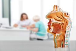 Diagnosis and treatment of ENT diseases. Nasal and oral cavity anatomical model on a table, over background ENT doctor consultation for her patient