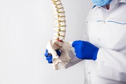 diagnostics and display of herniated intervertebral discs. plaster spine model