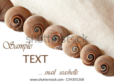Diagonal composition of snail seashells in progressive sizes with sand on white background with copy space.