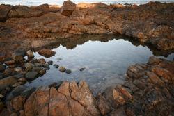 Diamond Beach Rockpool closeup
