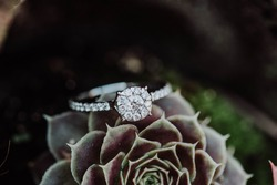 diamond ring on cactus, close up