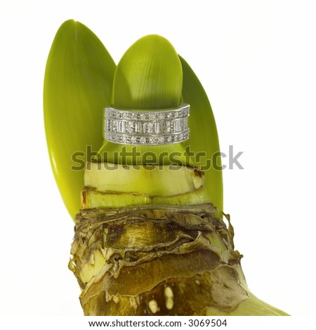 Diamond ring on flower sprout root