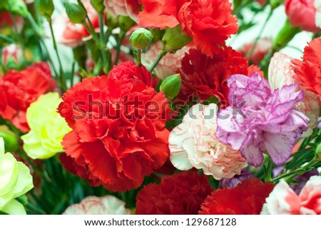 dianthus flowers, carnation pink in bouquet, sweet william