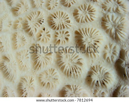 Died Sea coral closeup