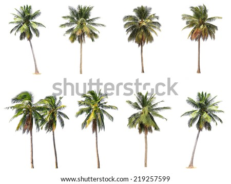 Difference of coconut tree isolated on white. #219257599