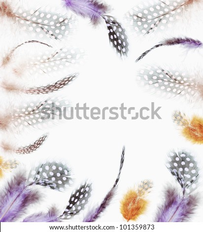Different angles of the guinea fowl feathers collection, Isolated on the white background