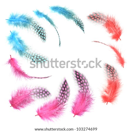 Different angles of the guinea fowl feathers collection,Three kinds red and Purple and blue,Isolated on the white background