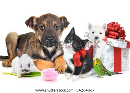 different animals with giftbox and flower together