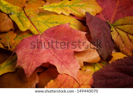 different autumn leaves, multicolored background autumn theme