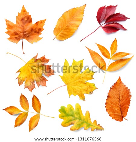 Different autumn leaves on white background