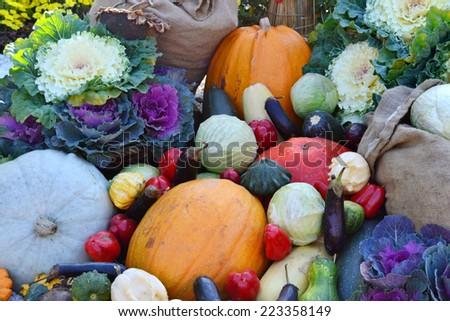 Different autumn vegetables: pumpkin, eggplant, zucchini, cauliflower #223358149