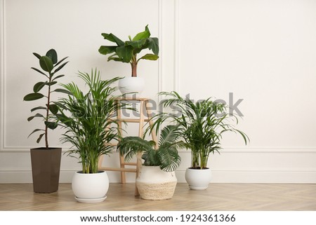 Different beautiful indoor plants in room. House decoration Stock photo ©