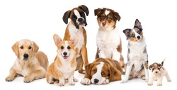 Different breed dog puppies isolated on white background
