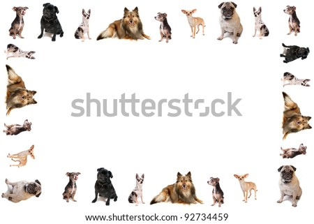 Different breeds of dog like chihuahuas, pugs, and sheltie in the form of a frame or border on a white background