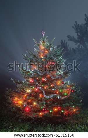 different christmas tree on snowless background, christmas tree with colored lights,
