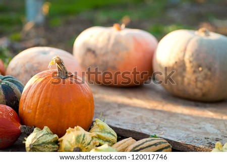 Different colored pumpkins