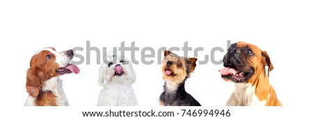 Different dogs looking up isolated on a white background