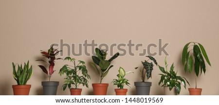 Different exotic houseplants on dark beige background #1448019569