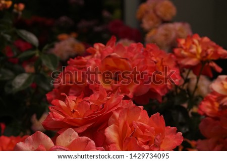 different flowers with different colors  #1429734095