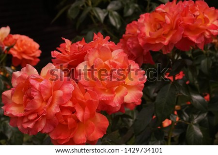different flowers with different colors  #1429734101