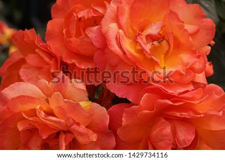different flowers with different colors  #1429734116