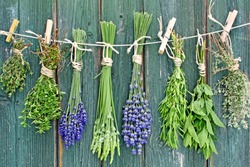 different fresh herbs hanging on a leash